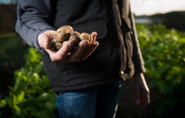 ¿Dónde comprar patatas baratas al por mayor?